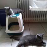 Mimi & Bubu